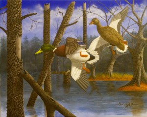 wildlife art, waterfowl art, mallard ducks